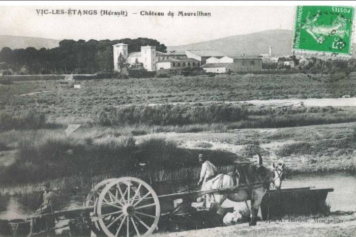 09 - Vic- les étangs- Maureilhan